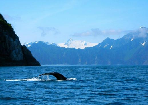 Seward, Alaska Whale Watching