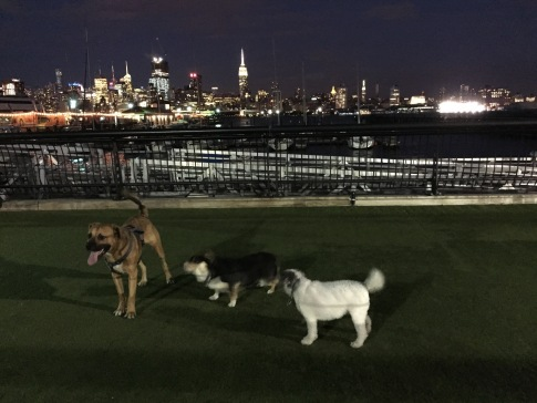Shipyard Hoboken Dog Park