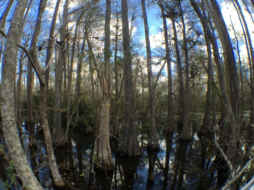 Big Cypress National Park, Florida