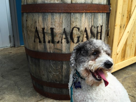 Dog Friendly Allagash Brewery