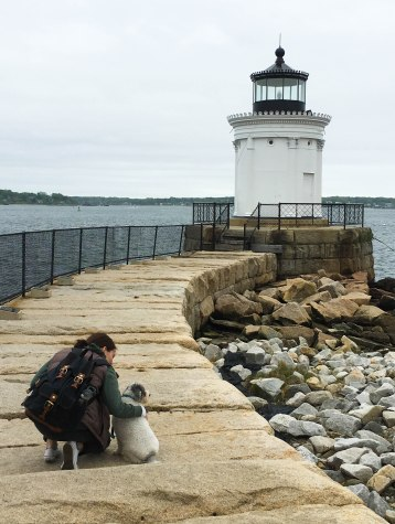 Dog Travel Tips Portland Maine