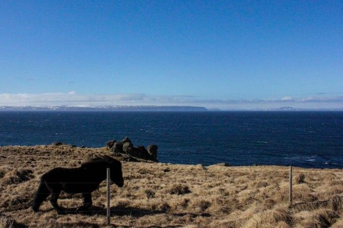 Vatnsnes Peninsula Iceland